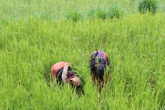 India - fieldwork 2017